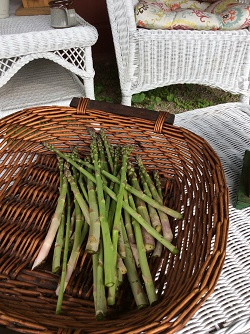 Fresh Asparagus from our garden