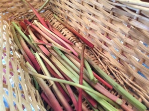 fresh from the garden rhubarb